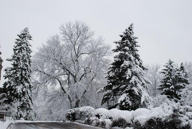 Winter Beauty Kingston, Ontario Canada