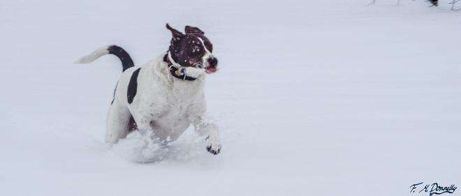 Snow Crazy!!!! Smiths Falls, Ontario Canada