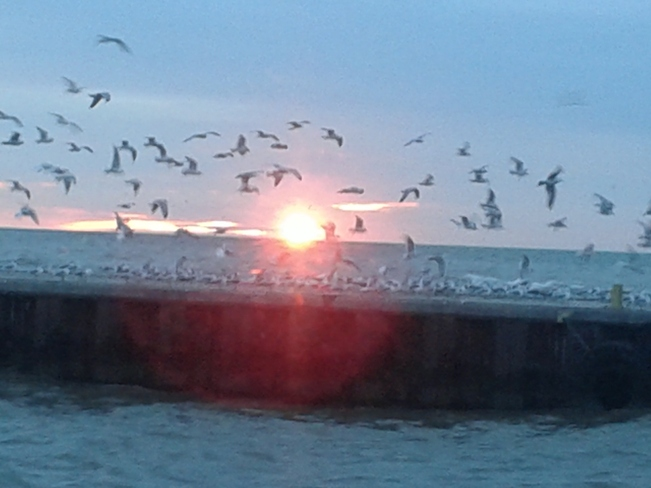 Birds flying in the Sunset Port Dover, Ontario Canada