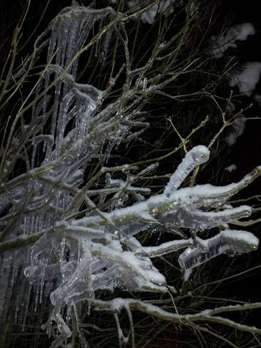 Iced branches at home London, Ontario Canada