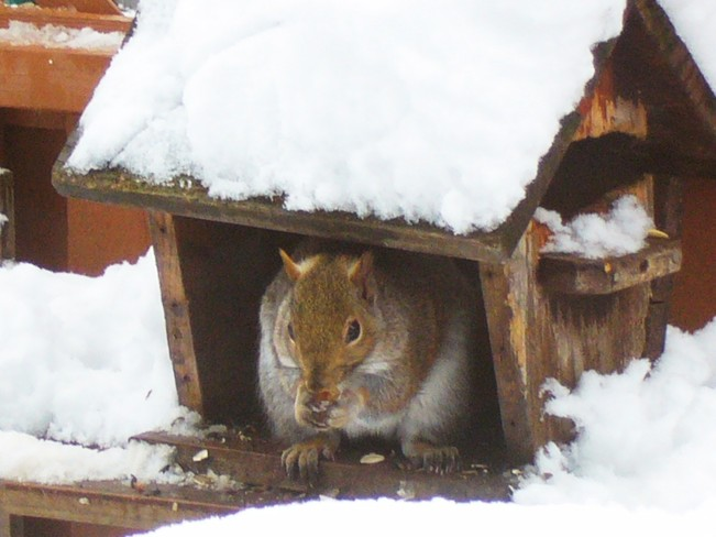 Squirrel in the House Kingston, Ontario Canada