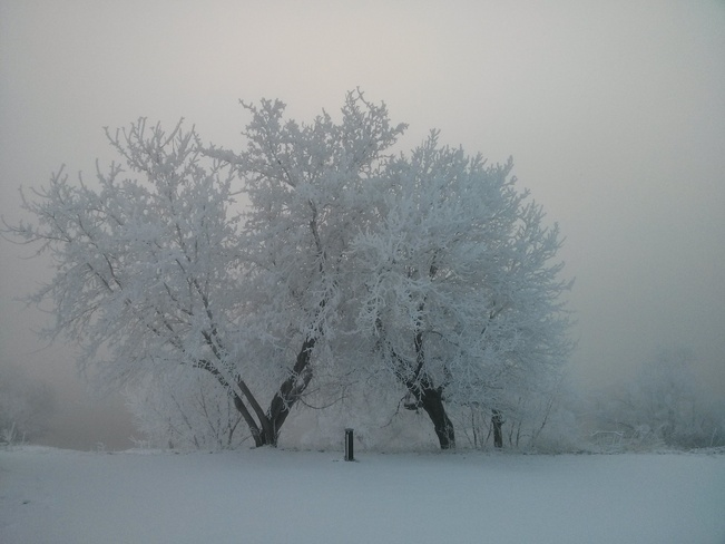 Beauty in fog and frost. Beachburg, Ontario Canada