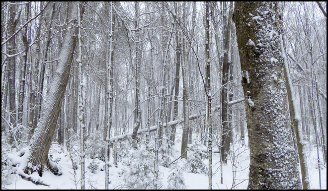 Sheriff Creek , red trail snowy woods. Elliot Lake, Ontario Canada