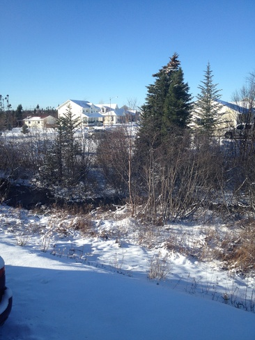 Snow! Gander, Newfoundland and Labrador Canada