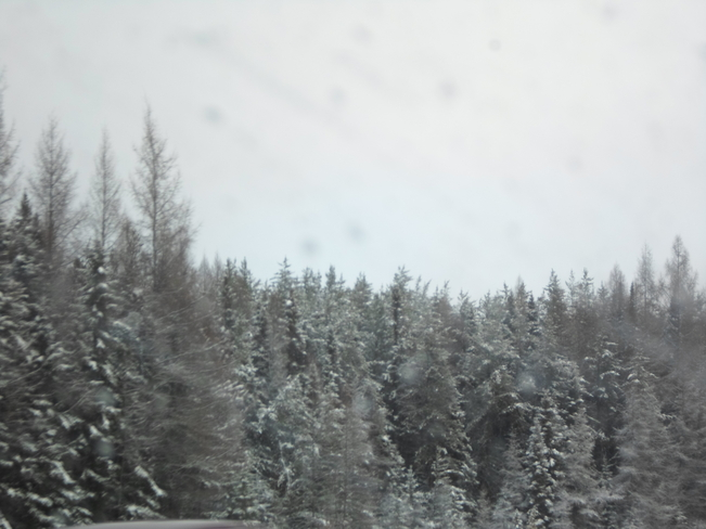 Snow on the trees, we have it now Elliot Lake, Ontario Canada