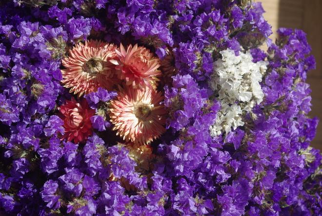 Everlasting Flowers Montréal, Quebec Canada