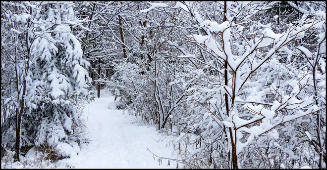 Sheriff Creek red trail Sunday wonderland. Elliot Lake, Ontario Canada