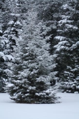 more snow Val Caron, Ontario Canada