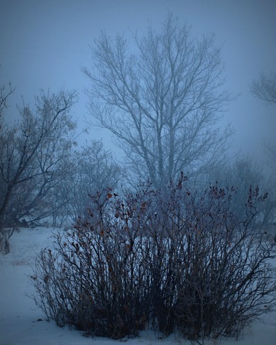 Foggy Morning Oyen, Alberta Canada