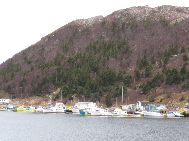Boats in the Harbour Baine Harbour, Newfoundland and Labrador Canada