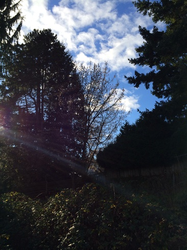 Sunny day in December Vancouver, British Columbia Canada