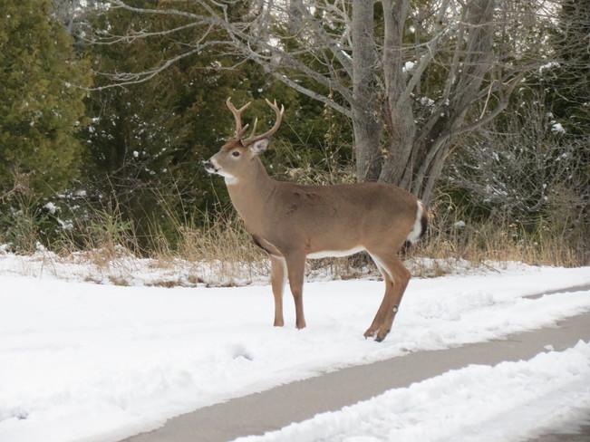 Presquile Park deer Brighton, Ontario Canada