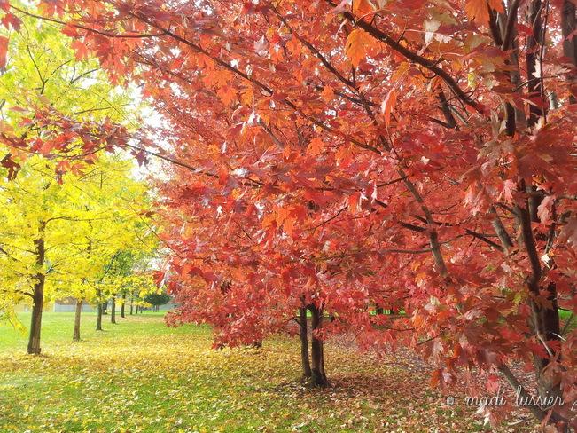 Ocean of colours Montréal, Quebec Canada