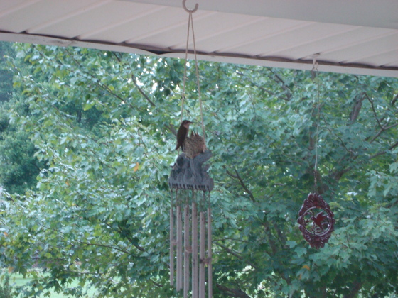mama feeding birds