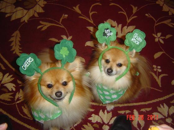 """""""Irish Poms"""""""