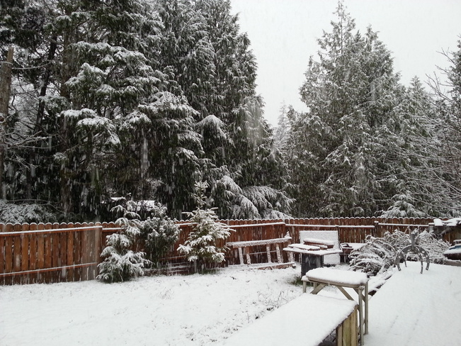 rare snow day on west coast Ucluelet, British Columbia Canada