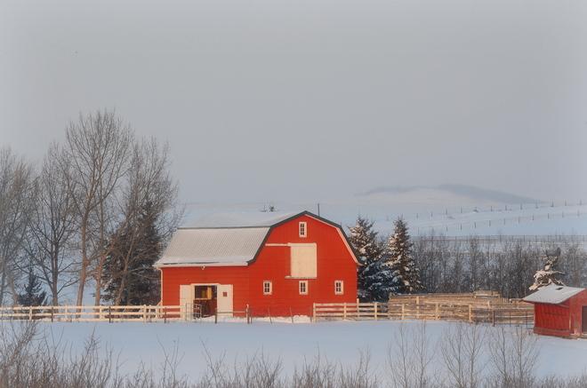 cold and frosty morning Okotoks, Alberta Canada