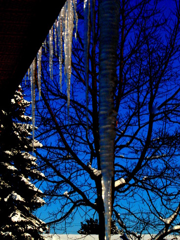 """Icy Eaves & Snowy Trees"" Escanaba, Michigan United States"