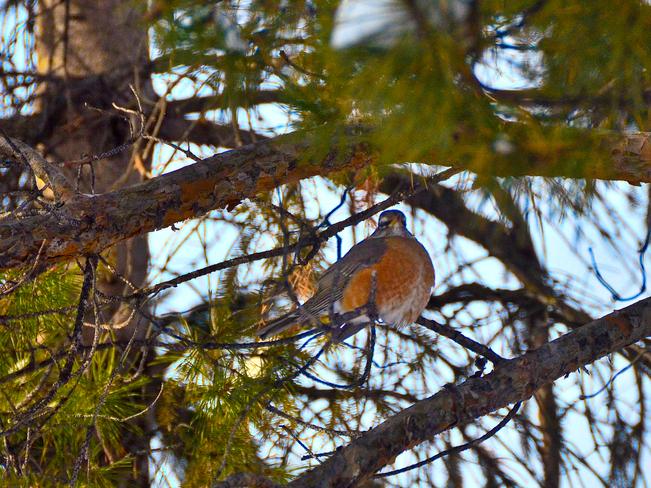 Backyard Winnipeg, Manitoba Canada