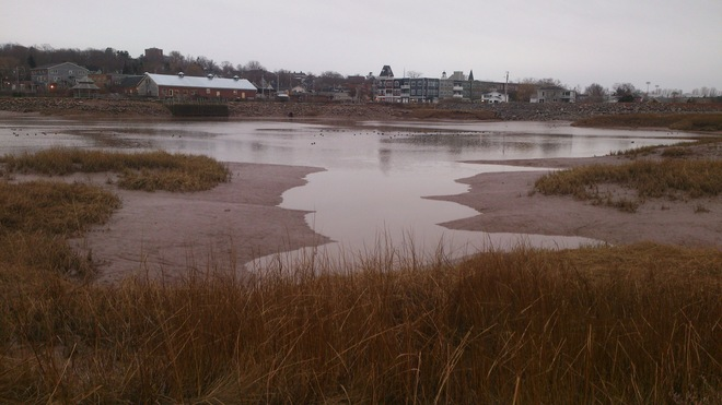 Wolfville Harbour is Just Ducky Wolfville, Nova Scotia Canada