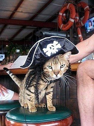 Bar Stool Kitty