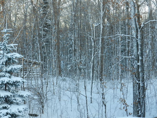 Watching the woods fill up with snow Bummers' Roost, Ontario Canada