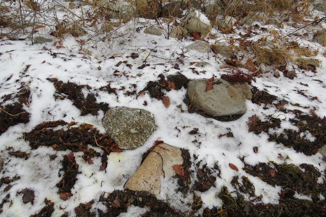 Snow With Rocks & More Chester, Nova Scotia Canada