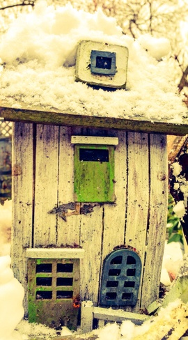 Snowy day in the garden Vancouver, British Columbia Canada