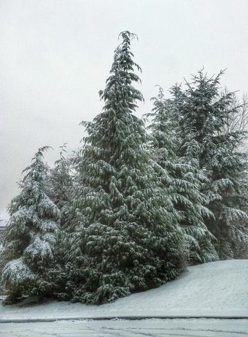 west coast snow Coquitlam, British Columbia Canada