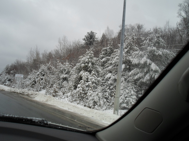Oh Yes SNOW,on evergreens