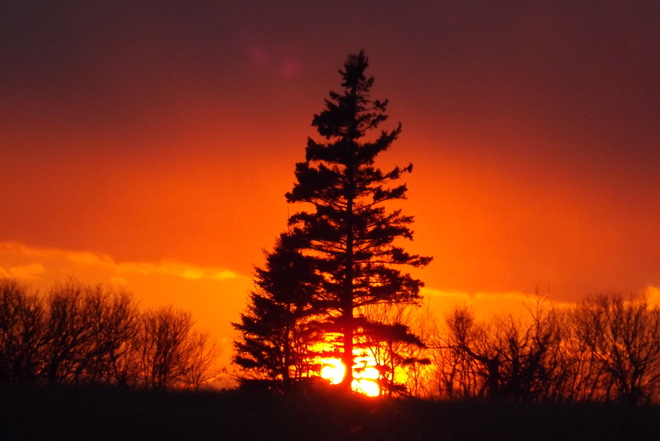 natures sunset Christmas tree Malpeque, Prince Edward Island Canada