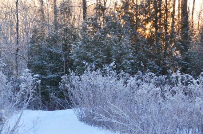 Frosted sunrise Erin, Ontario Canada