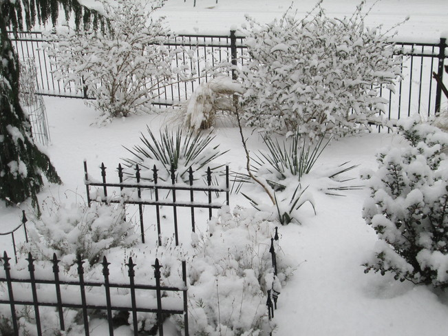 Garden in the winter St. Catharines, Ontario Canada