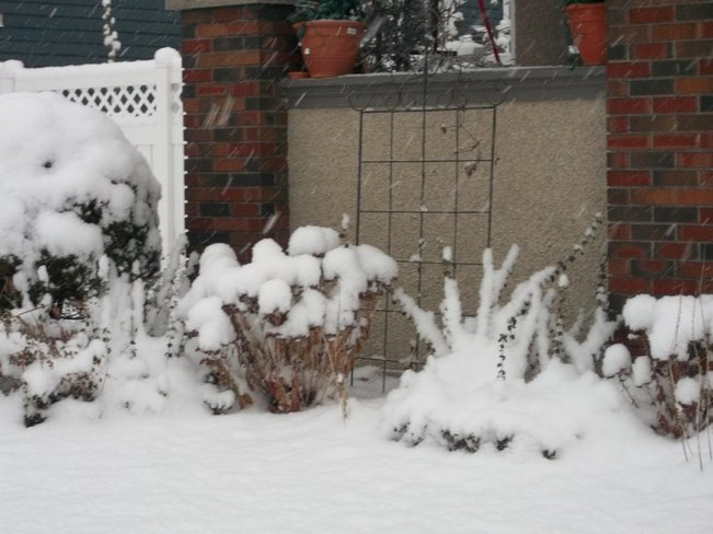 Snow Tufts St. Catharines, Ontario Canada