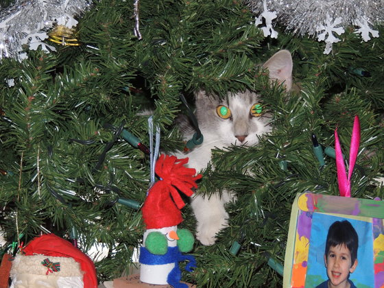 Christmas photo of cat in tree