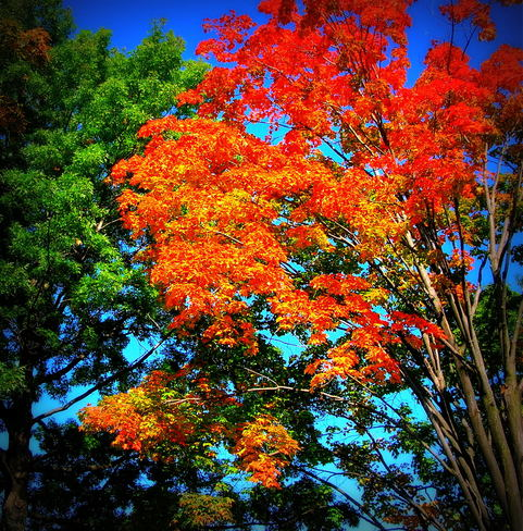 Fall colors Mississauga, Ontario Canada