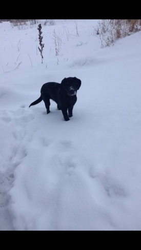 Bear loves The Snow<3 Martensville, Saskatchewan Canada