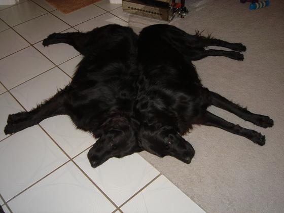 Perfect Community Dog Skin Rug
