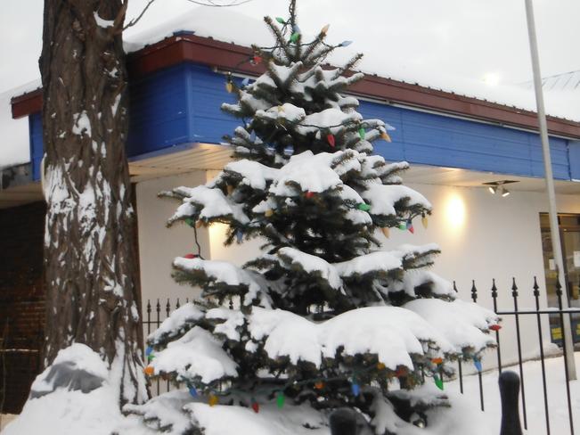 Snow covered tree Hamilton, Ontario Canada