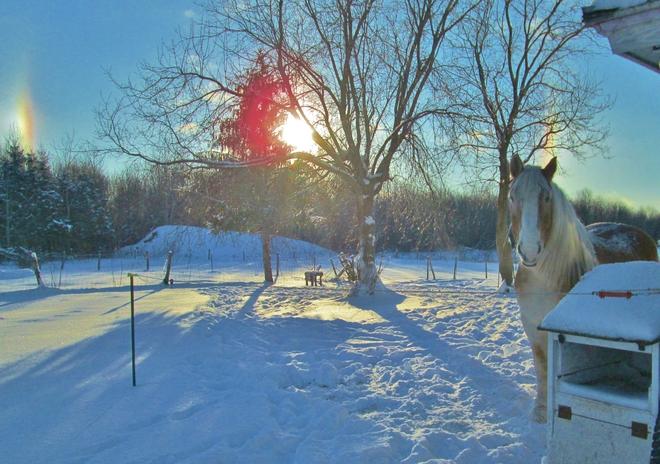 Sun dogs and a horse Farnham, Quebec Canada