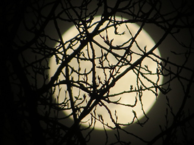 Woodlands Moon New Westminster, British Columbia Canada