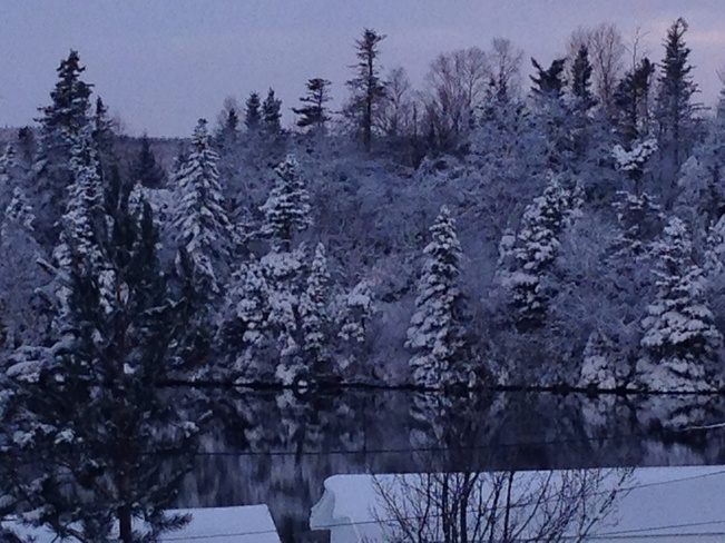Snow coated trees. South Brook, Newfoundland and Labrador Canada