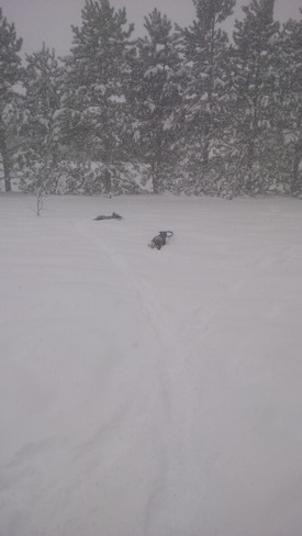 Dogs enjoying a little Frisbee in the snow! Dieppe, New Brunswick Canada