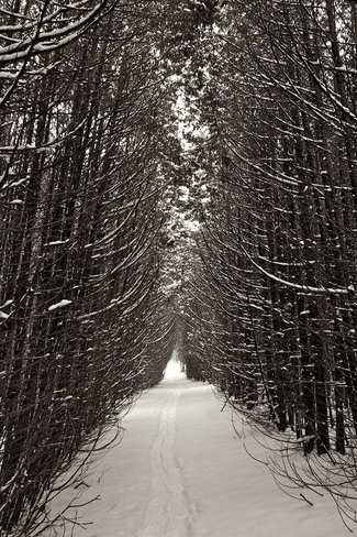 The Enchanted (Haunted) Forest King City, Ontario Canada