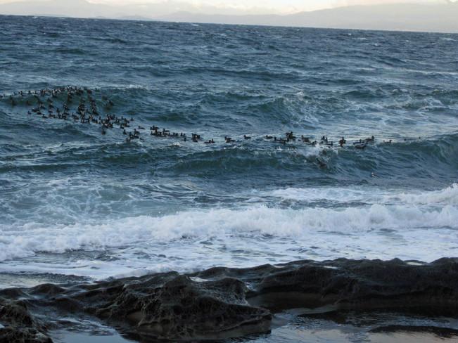 Having fun on December waves