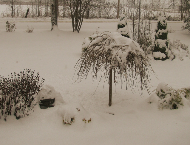 Winter wonderland... Pembroke, Ontario Canada