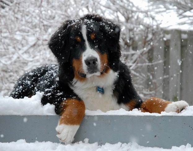Gatsby Loves the Snow! Newmarket, Ontario Canada