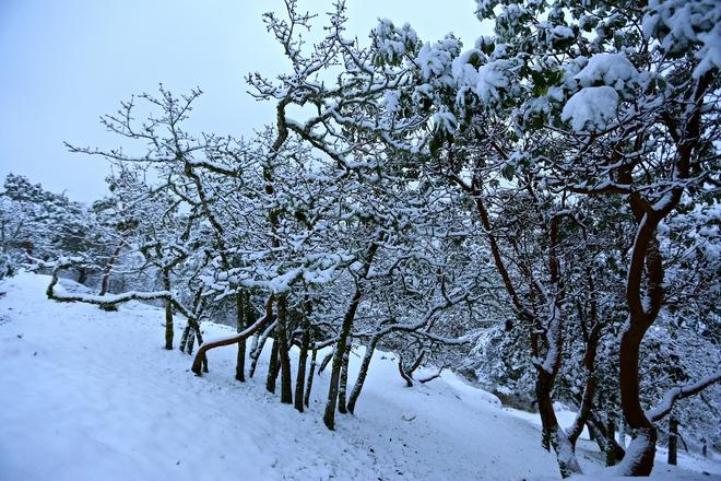 Snow Day Victoria, British Columbia Canada