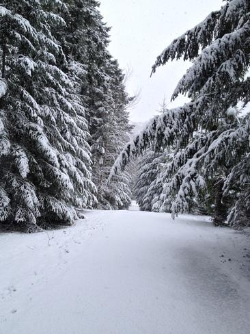 shovel this driveway! Nanaimo, British Columbia Canada