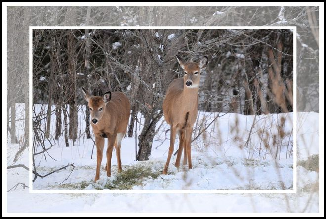 A Pair of Natural Beauties by Rural Woman of the Year, Leah Toth Port Loring, Ontario Canada